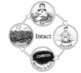 Intact_nutrient_cycle.png