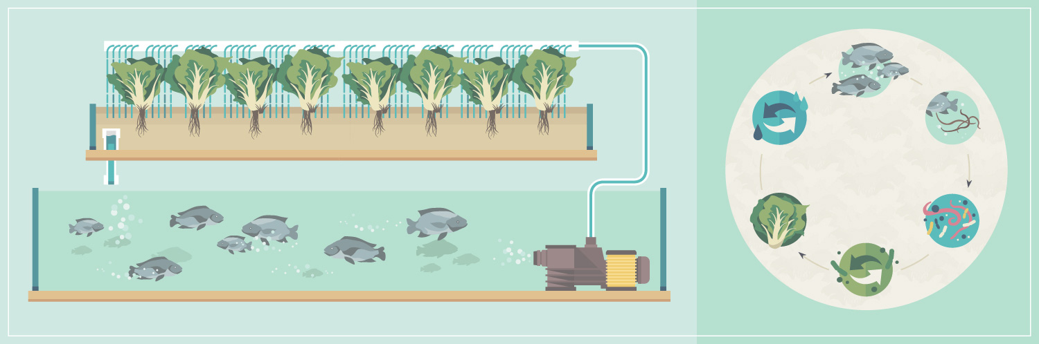 Future of Farming – Aquaponics – appropriatetechnology